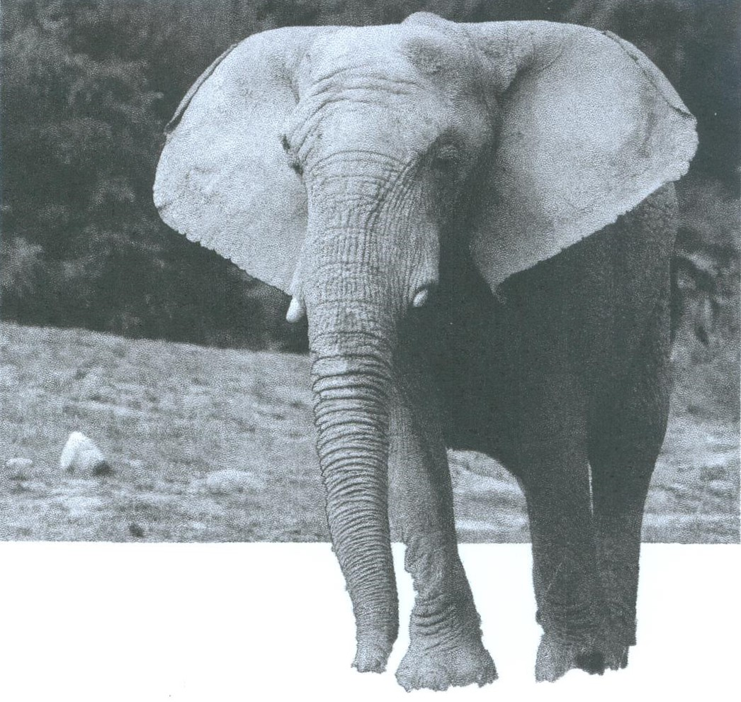 Photo éléphant